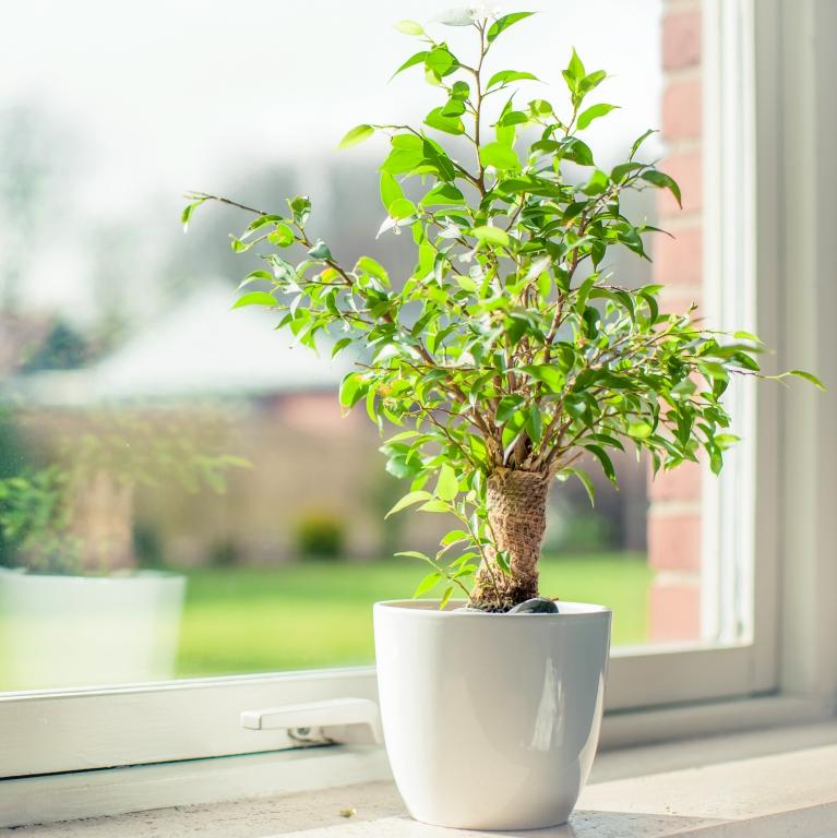 Auf Zimmerpflanzen insbesondere im Schlafzimmer verzichten